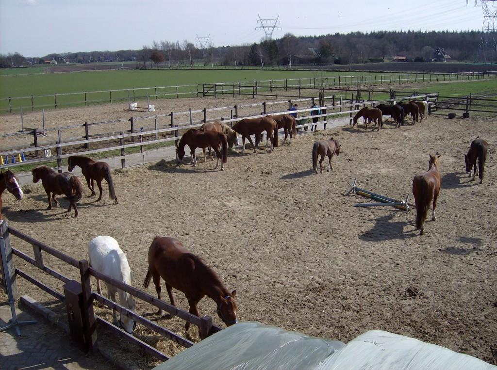 Ponyvrienden 2010
